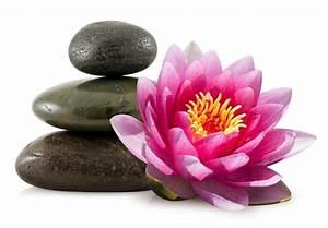 Blume Und Leben : fototapete lotus blume und zen steine pixers wir ~ Articles-book.com Haus und Dekorationen