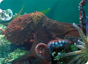 2305 The Oceans: A Physical Geography: Octopus Attacks Shark
