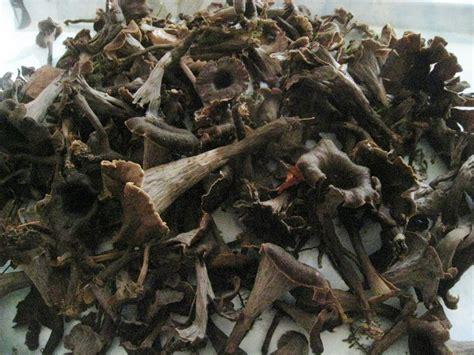 cuisiner les trompettes de la mort trompette de la mort à la crème les p 39 plats de christiane