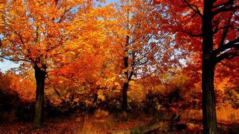 places   fall foliage   brampton