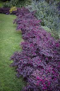sun loving shrubs The 25+ best Full sun plants ideas on Pinterest | Full sun ...