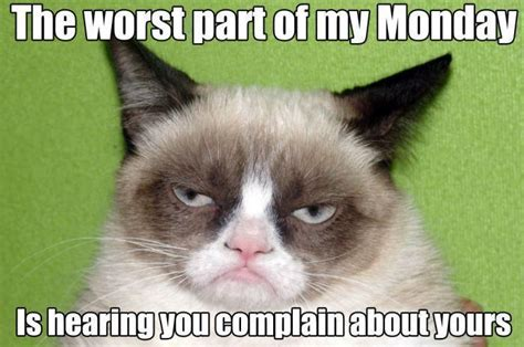 Best Grumpy Cat Meme - top 25 grumpy cat memes cattime