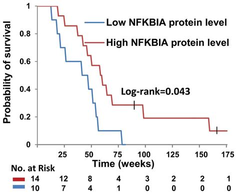 Identification Of A Nfkbia Polymorphism Associated With