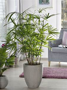 Arbuste D Intérieur : 4 plantes d 39 int rieur sp cial amateurs d tente jardin ~ Premium-room.com Idées de Décoration