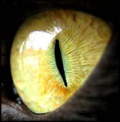 cat s eye 301 moved permanently