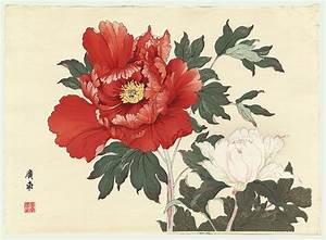 Japanese peonies - Lookup BeforeBuying