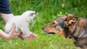 Do dogs or cats love their owners more? Study says one pet ...