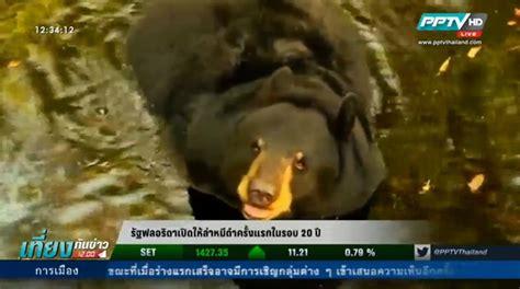 รัฐฟลอริดาเปิดให้ล่าหมีดำครั้งแรกในรอบ 20 ปี : PPTVHD36