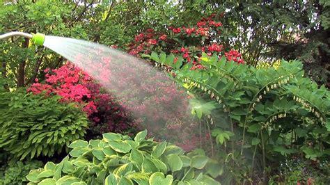 Garten Pflanzen Zeitpunkt by Pflanzen Im Garten Giessen Zeitpunkt Tipps Bew 228 Sserung