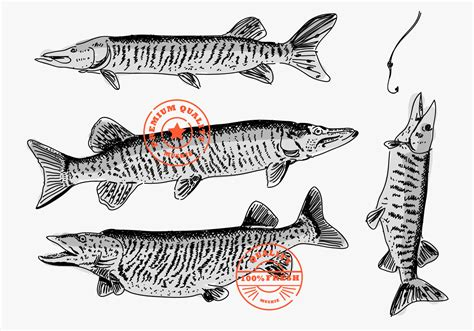 muskie fish hand drawn brand logo vector illustration