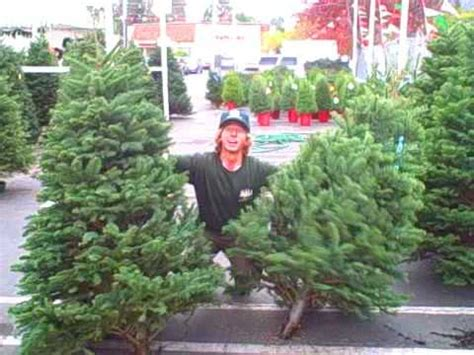 christmastree lot utah tree lot commercial