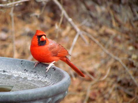 Birding In My Backyard