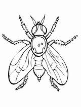 Fly Coloring Pages Fruit Guy Firefly Insect Drawing Printable Supercoloring Flies Fireflies Print Getdrawings Getcolorings Animals Super Insects Spider Results sketch template