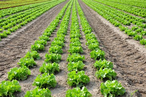 asu study shows effect  climate change  food energy