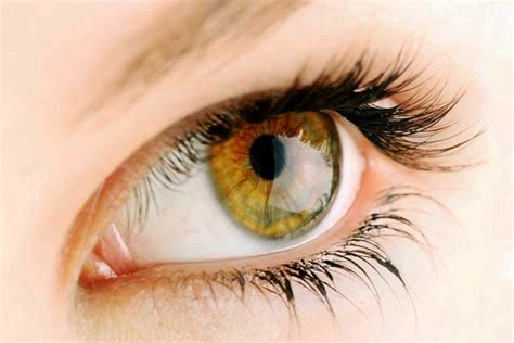 brown eye colors hazel what determines hazel eye color