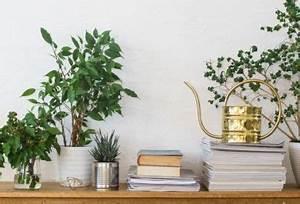 Zimmerpflanzen Für Kinderzimmer : top 10 der zimmerpflanzen die f r bessere luftqualit t zu hause sorgen ~ Orissabook.com Haus und Dekorationen