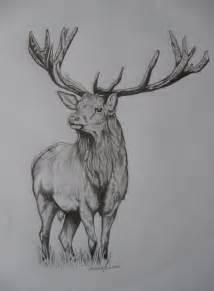 Red Stag Deer Drawings