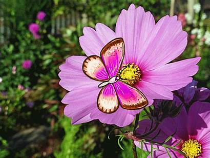 Butterfly Spring Flower Animated Lovethispic Gifs Flores