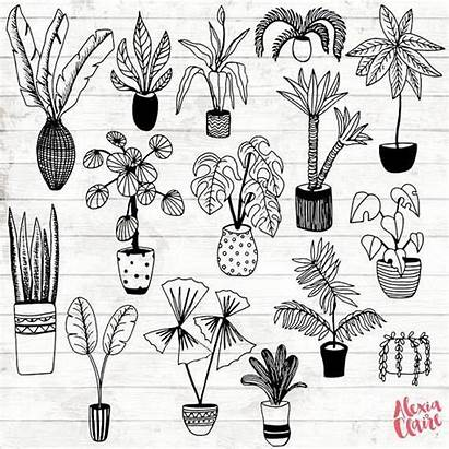 Plant Drawing Plants Potted Clipart Hand Clip