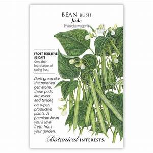 Jade Bush Bean Seeds  Vegetables  Botanical Interests
