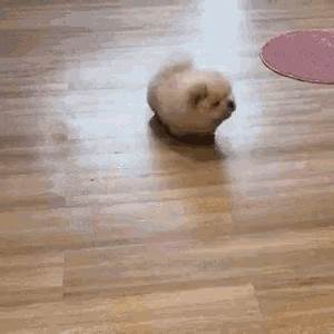 Mop Dogs GIF - Mop Dogs - Discover & Share GIFs