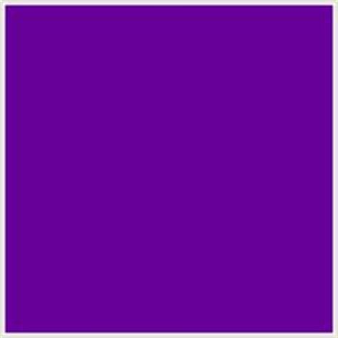 bluish purple color 1000 images about garden on perennials
