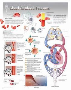 Blood And Blood Pressure Scientific Publishing