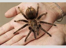 Spinnenphobie Was Menschen mit Angst vor Spinnen tun