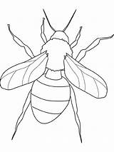 Fly Insect Coloring Pages Bugs sketch template