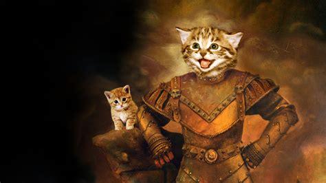 Cat Hd Wallpaper Background Image 1920x1080