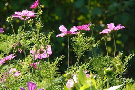 Blumen Im Garten Von Monsieur Lethullieur Foto & Bild