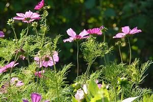 Blumen Im Garten : blumen im garten von monsieur lethullieur foto bild europe france normandie bilder auf ~ Bigdaddyawards.com Haus und Dekorationen