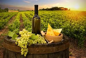 Ava Winery Turns Water into Synthetic Wine - Nanalyze