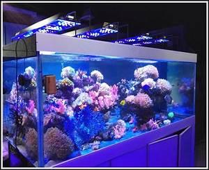 Aquarium Led Beleuchtung : aquarium led beleuchtung selber bauen 2014 download page beste wohnideen galerie ~ Frokenaadalensverden.com Haus und Dekorationen