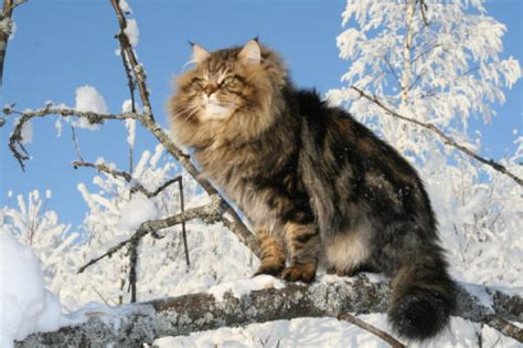 Exclusively Cats Veterinary Hospital Blog Can I Buy A