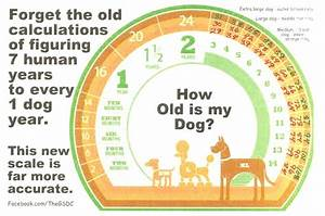 senior pet health when is my pet considered a senior and why its important