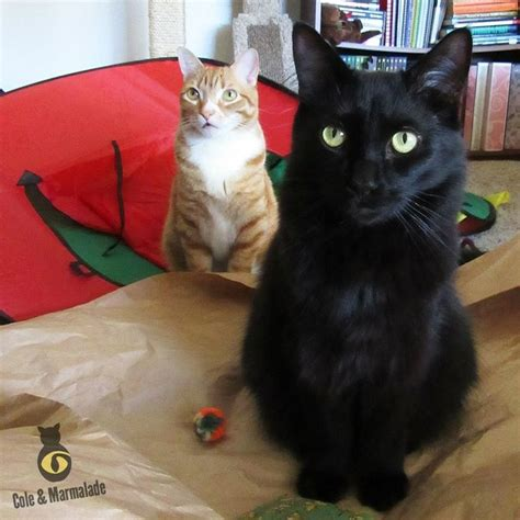images  cole marmalade  pinterest cats