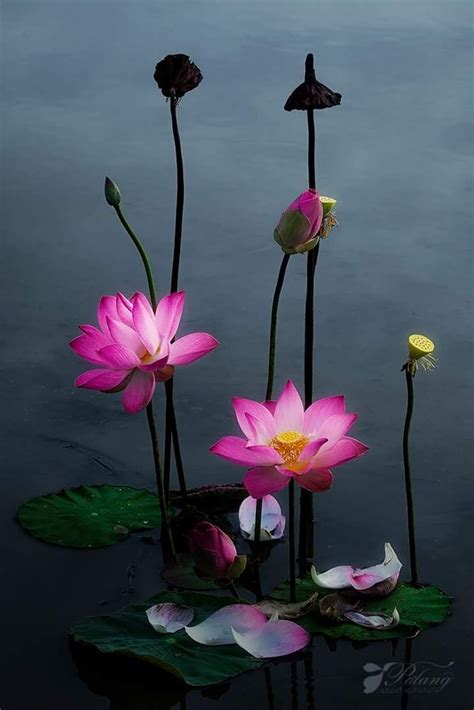 Lovely A Beautiful Shot Flowers Lotus And Lily