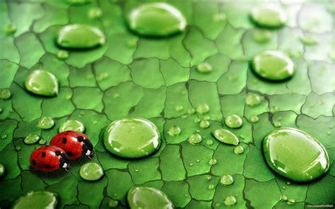 Nature water drops ladybirds Wallpapers HD / Desktop and ...