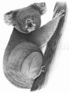 How to Draw a Realistic Koala, Step by Step, forest ...