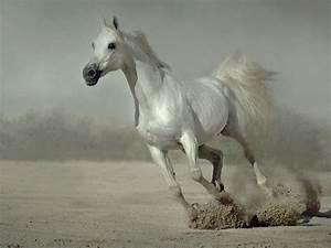 Animals Zoo Park: 9 White Running Horse Wallpapers, White ...