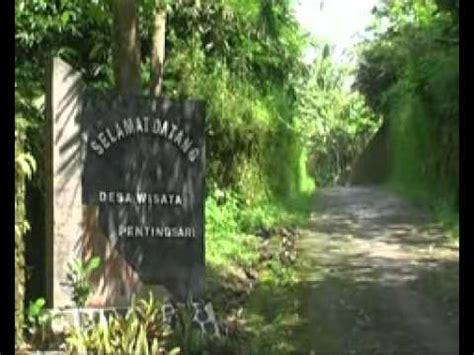 video desa wisata pentingsari youtube
