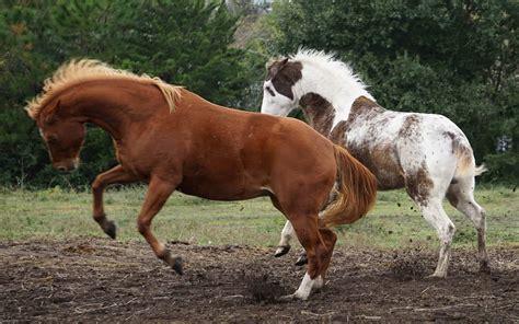 Welches Gebiss Für Junges Pferd