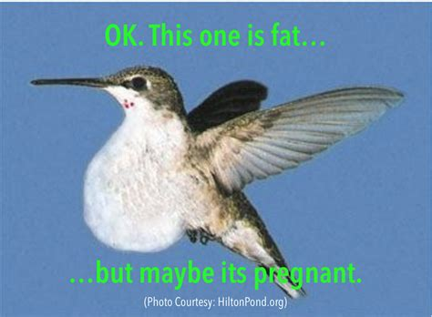 don t eat like a hummingbird not if you want to lose weight