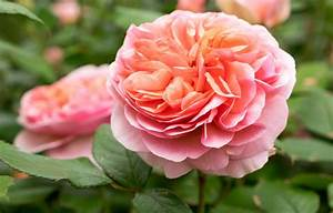 Why You Should Combine Roses With Other Plants Better