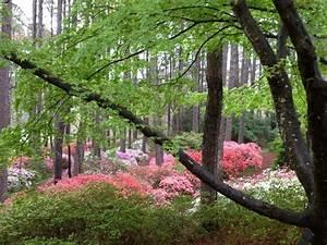 Callaway gardens azalea photos