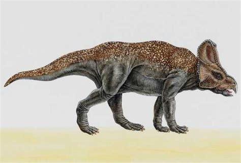 Protoceratops Dinosaur Pictures