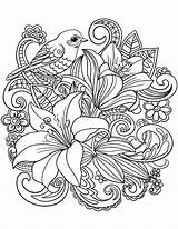 Coloring Adults Pages Floral Bird Bouquet sketch template