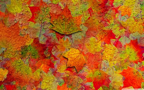 Autumn Tree Leaf Fall Animated Wallpaper - iphone 6 autumn wallpaper 87 images