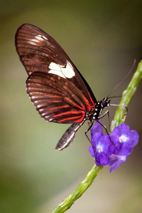jeff finkelstein photography butterflies